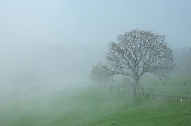 Lipperland, Baum im Nebel auf grüner Wiese