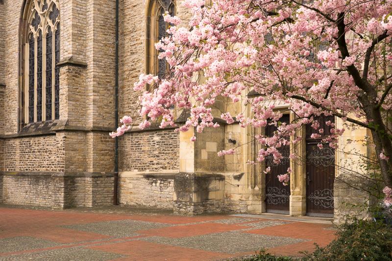 Frühling in Altenberge