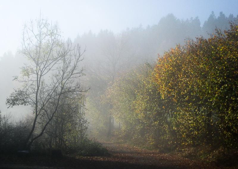Morgennebel im Wald, Herbst