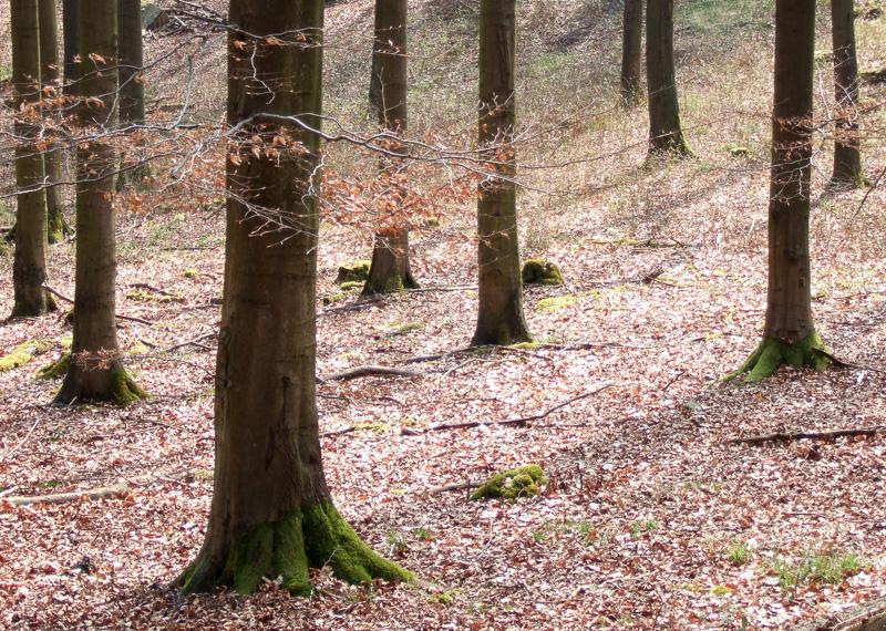 Baumstämme im Wald bei Barntrup