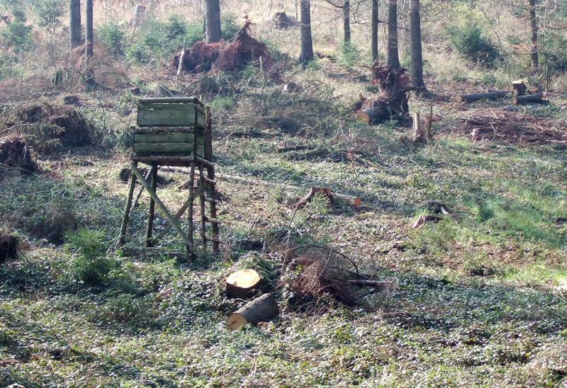 Hochsitz im Wald bei Barntrup