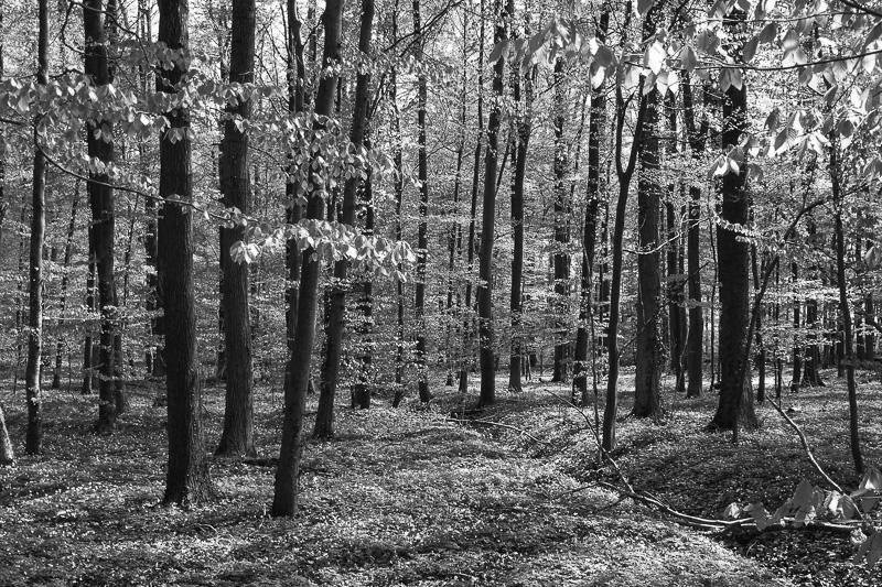 Wald in Schwarzweiss