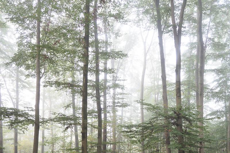 Wald, Nebel, Herbst