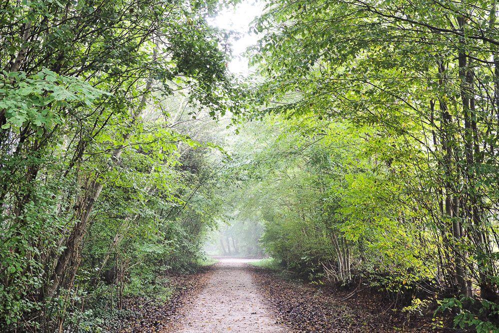 Waldweg im Herbst bei Regen