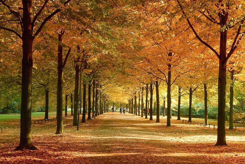 Allee, Herbst in Münster