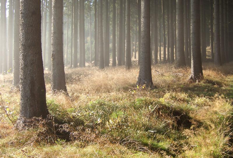 Morgens im Wald, Bad Berleburg