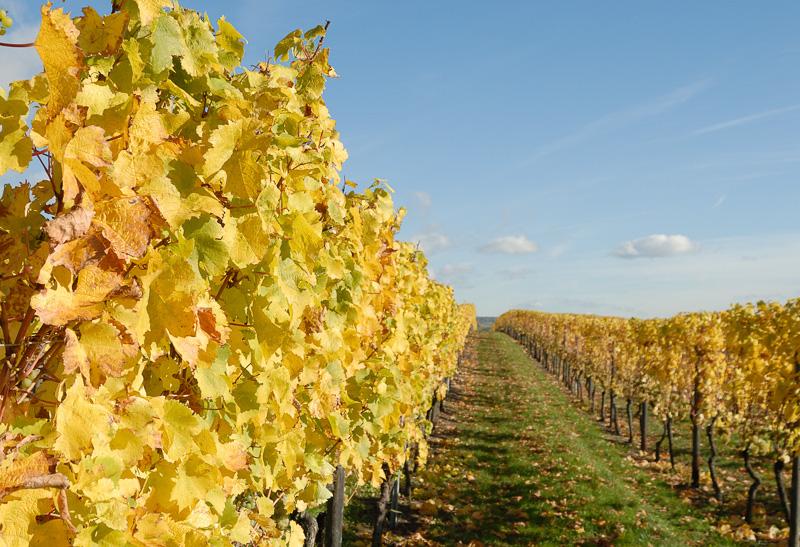 Weg zwischen den Weinreben