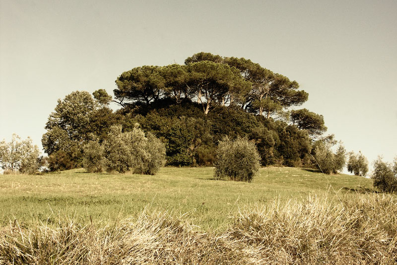 Tuscan Toscana Bäume
