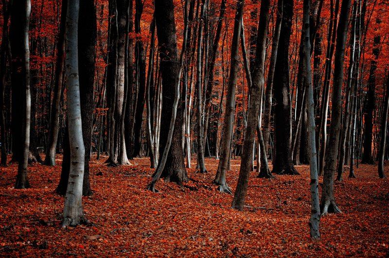 Herstwald, Wald im Herbst