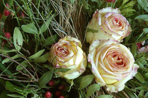 Drei gelbe angewelkte Rosenblüten