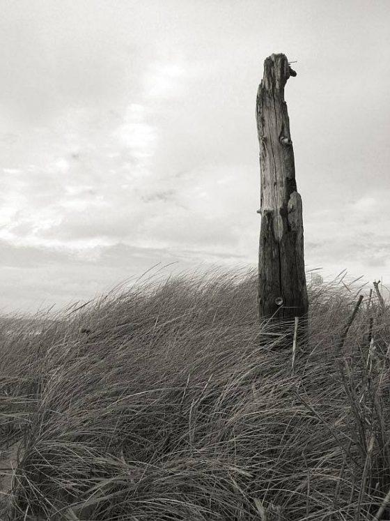Am Strand, bei Kampen, Strandholz