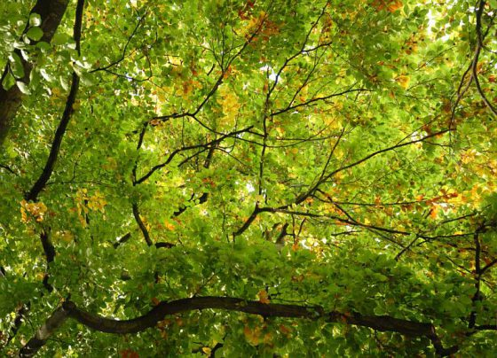 Leuchtendes Herbstlaub, Botanischer Garten Münster