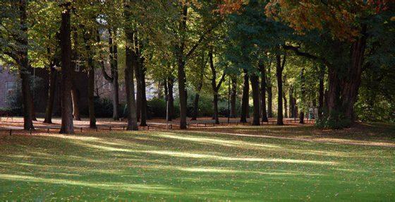Noch ein Herbstfoto: Blick auf die Promenade / Münster