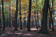 Herbstimpessionen, Dülmener Wildpark