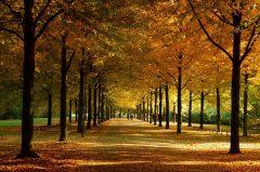 Promenade Münster im Herbst