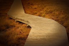 Weg im Moor