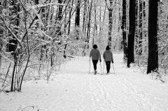 Nordic Walking im Winterwald