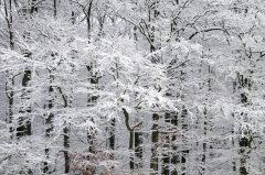 Winter Wonderland, Wald und Bäume