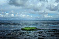 Grassbüschel im Watt, Sylt
