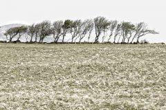 Irland, Baumreihe