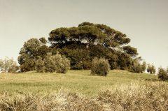 Bäume, Montaione Toscana 2005