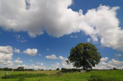 Baum bei Albersloh, Werseradweg