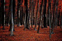 Feuer, Hebstwald, Münster, Wald im Herbst