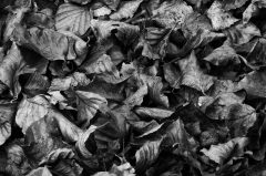 Waldboden, Herbstlauf in Schwarzweiss