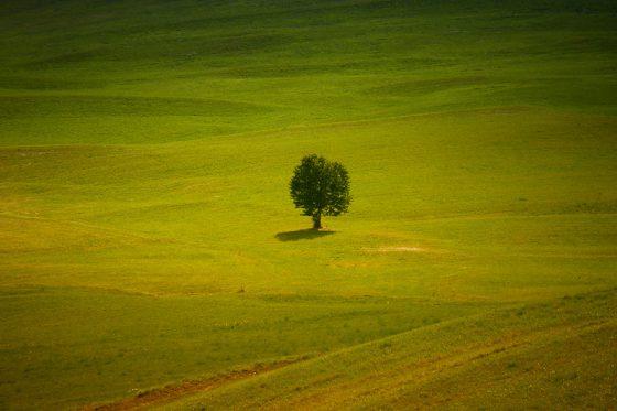 Einsamer Baum, Südtirol, Bilck vom Berggasthof Schönblick