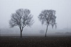 Bäume im Nebel bei Dülmen Leuste