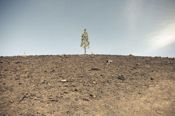 Baum mit Mondlandschaft