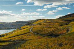 Landschaft und Weinberge am Rhein