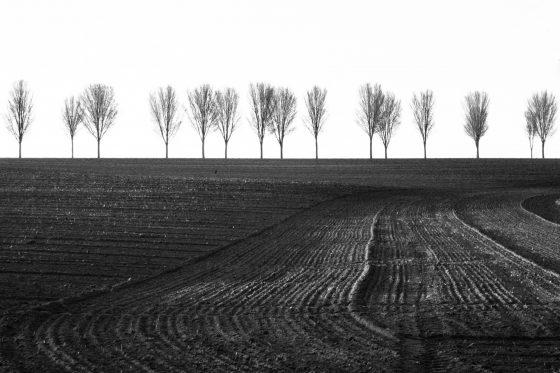 Baumreihe am Coesfelder Berg