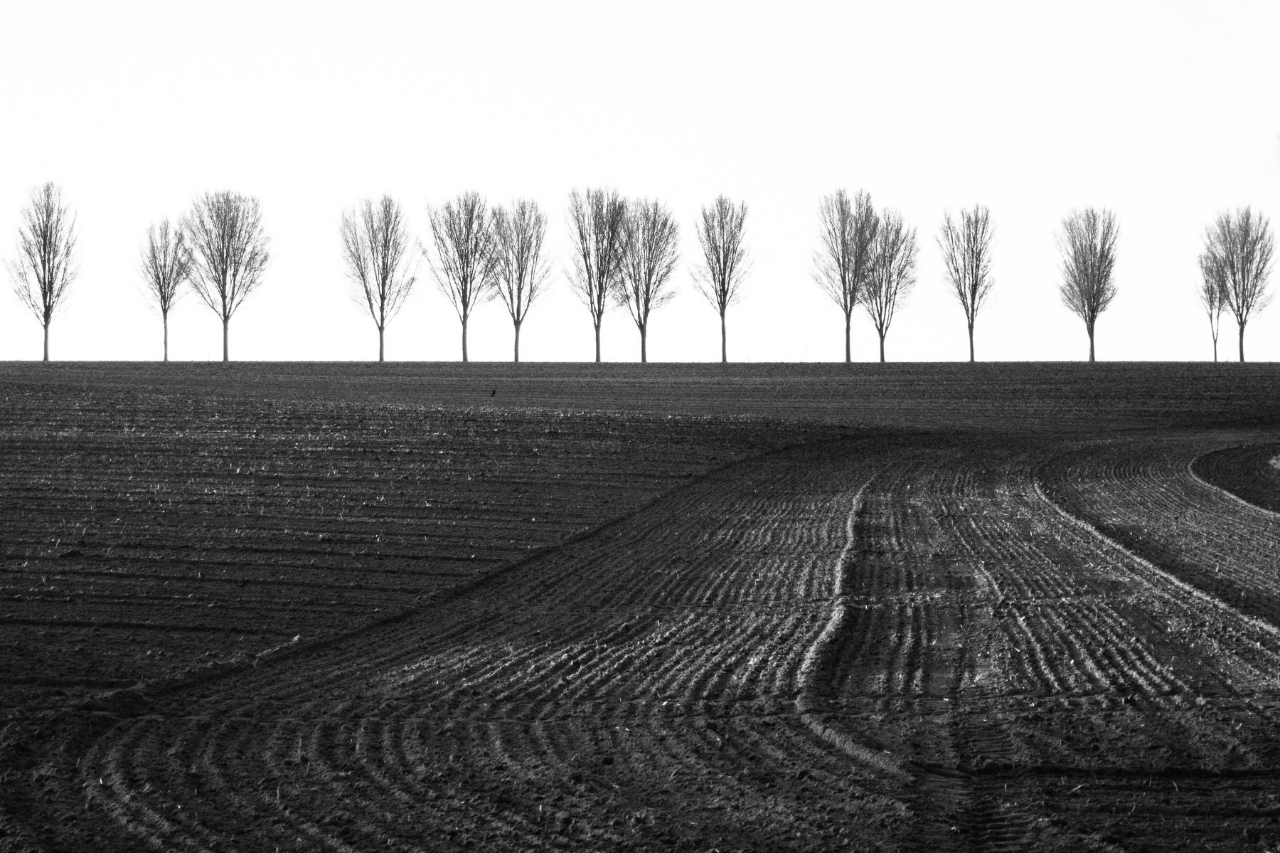Baumreihe im Münsterland in schwarzweiß