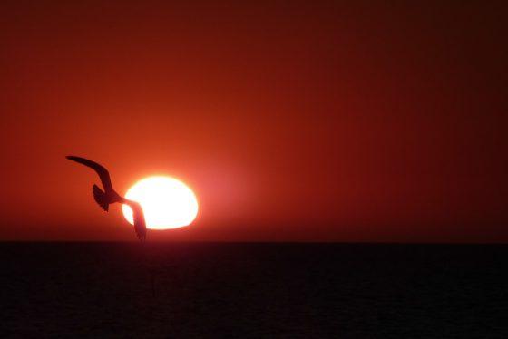 Sonnenuntergang am Meer mit Möwe
