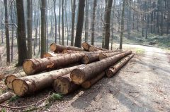 Wald bei Barntrup / Blomberg, Lipperland