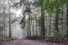 Wald im Münsterland