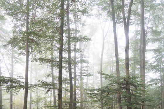 Wald im Nebel, Münster Herbst 2014