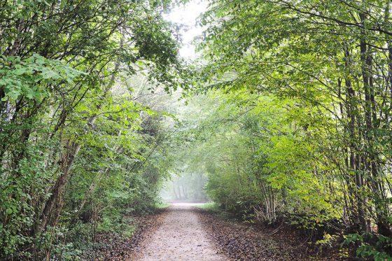 Regen und Nebel im Wald