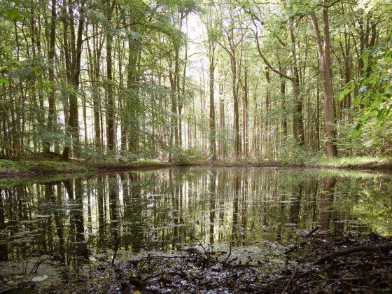 Telgte, Tümpel im Wald mit Spiegelung