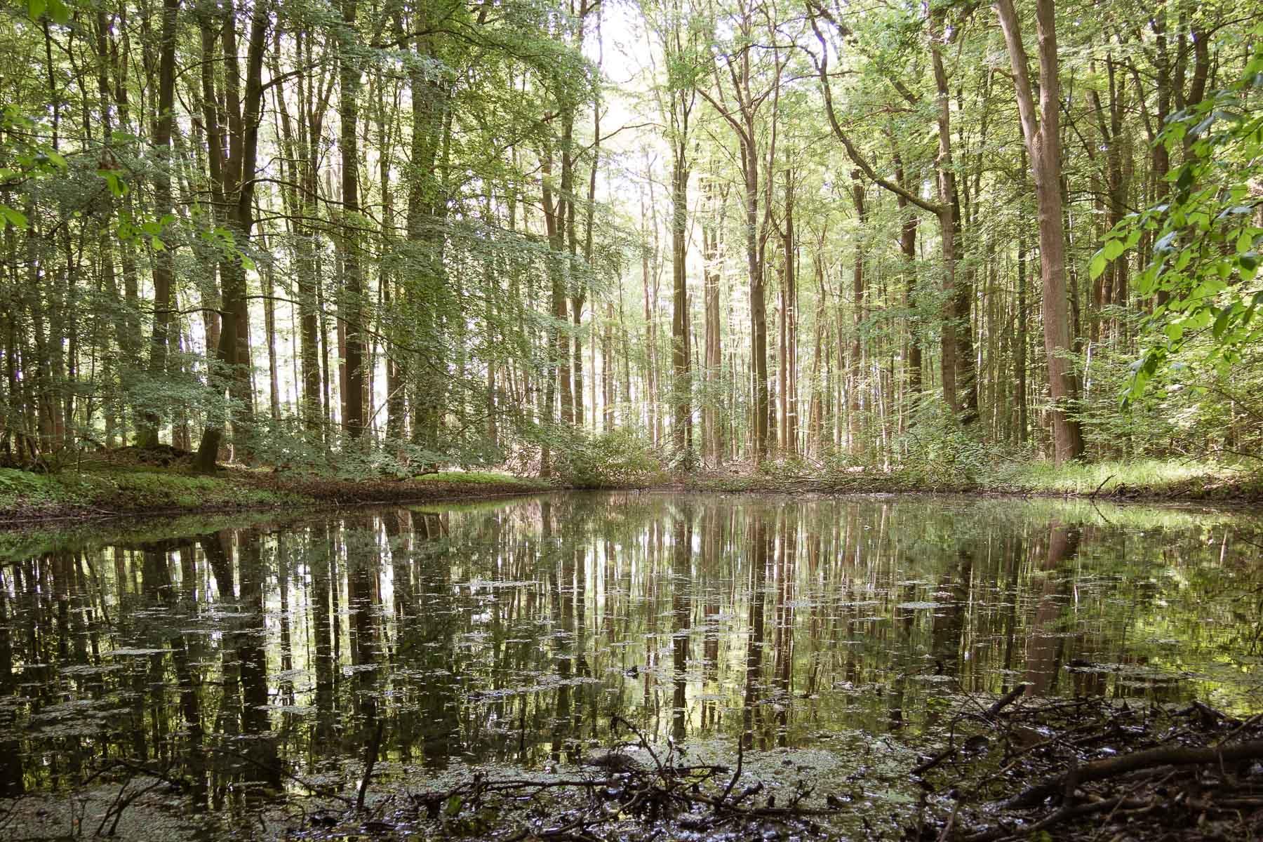 Spiegelung auf dem Wasser, Telgte